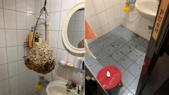 下班想洗澡!打開浴室驚見虎頭蜂窩 他嚇傻