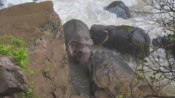小象墜急流!5象捨命救援 慘死地獄瀑布