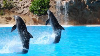 不忍鯨豚受圈養!旅遊平台停售海洋世界門票