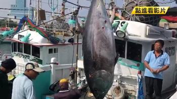 保護漁業資源!台日擬互換配額…恐損失4億元