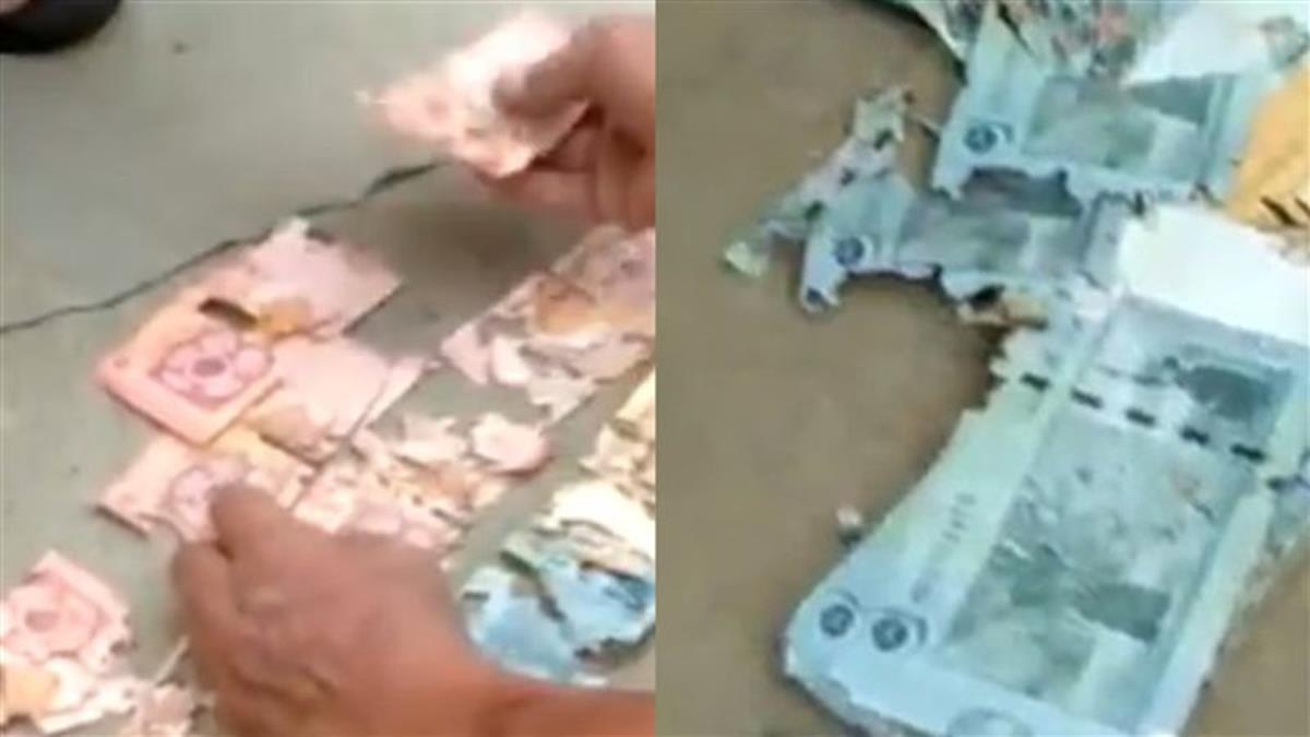 成堆鈔票藏牆內!再拿出竟成碎屑 全被牠吃下肚