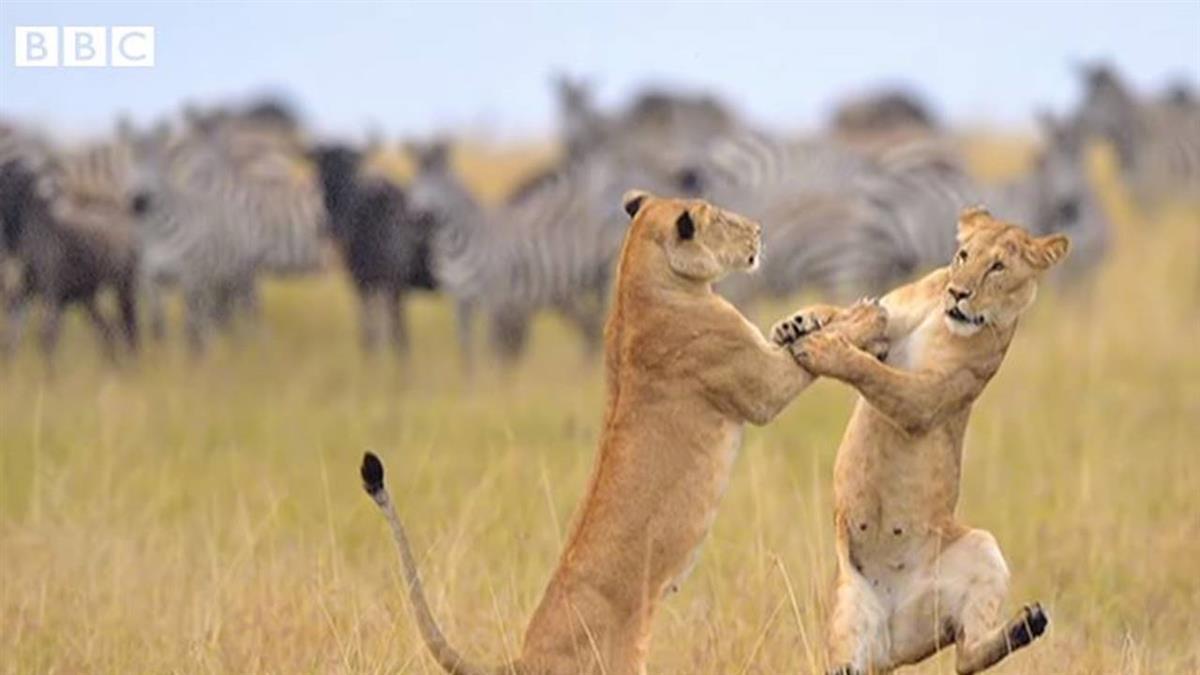 野生動物搞笑攝影獎 你最喜歡哪一張?