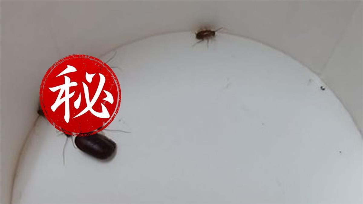 人妻實測一顆蟑螂蛋生幾隻!1個月結果超崩潰