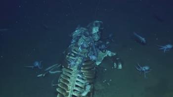 鯨落現場曝光!深海生物狂啃 5m鯨屍剩白骨