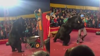 馬戲團棕熊撲咬馴獸師!觀眾以為是表演看傻