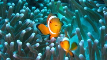 尼莫恐絕後!光汙染害魚卵難孵化…各國這樣防