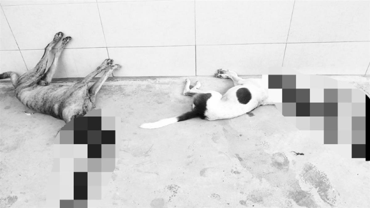 小孩被狗嚇到!惡男殘忍射殺 5狗吐血慘死