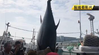 長期大量食用深海大魚 恐汞危害致男性不孕