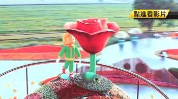 小王子吸眼球!花毯節強勢回歸 巨型玫瑰爭豔