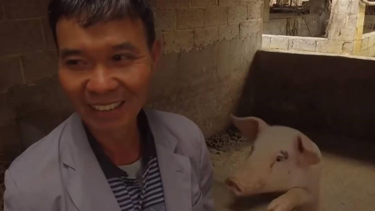 非洲豬瘟:曾有百餘頭豬的豬農,如今豬棚只剩一頭母豬