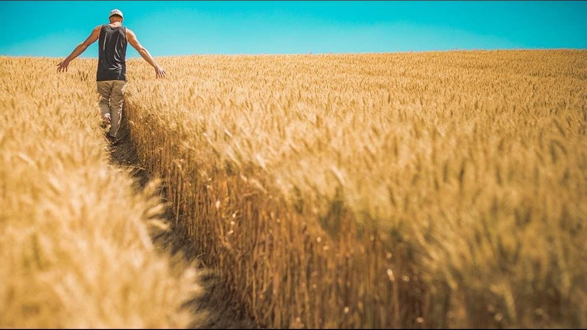 美農場破產創8年來新高!農民支持度恐成川普連任阻礙
