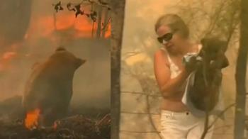 澳洲女子眼明手快 無尾熊免變火球