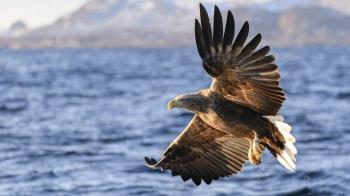 地球上消失的動物和傳說中「死而復生」的幸運兒