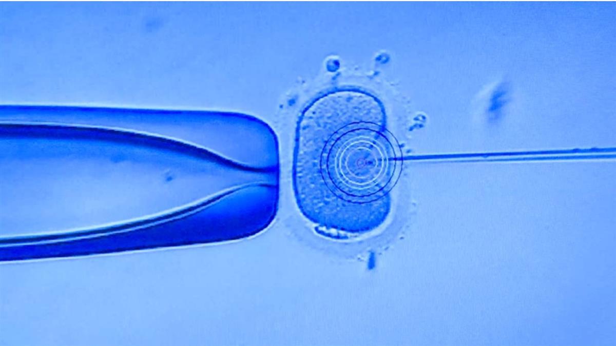 18年前就有!人工生殖法草案擱置 爭議不停