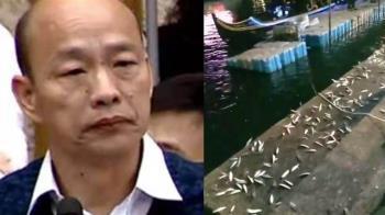 韓國瑜回防 愛河魚群跳上岸 韓粉:賭龍顏