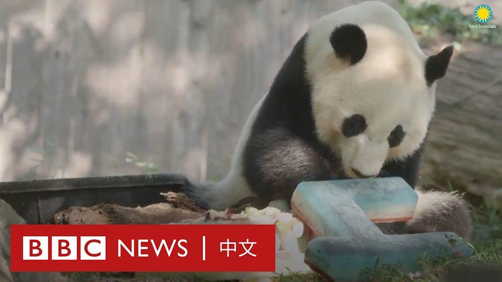 中國熊貓外交60載摸爬滾打 「華裔二代」回國記