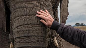 母象過勞死 柬埔寨明年起禁騎象遊古蹟