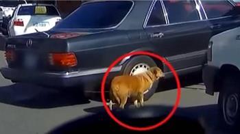 狗綁排氣管 騎士急攔駕駛驚:怎麼會有狗
