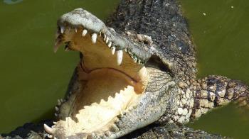 工人河邊失蹤 村民捕巨鱷剖腹驚見碎骨