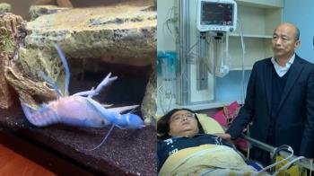 藍蝦自夾痛摔 網友嘲諷:快送重症病房