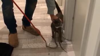 貓廝殺世界第2毒蛇 結局專家驚:第一次見