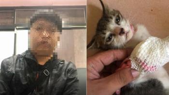 新竹男虐殺9幼貓 遭私刑痛喊:再不碰毛孩