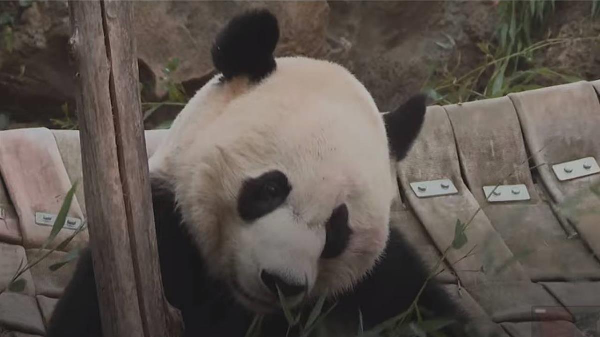 中國熊貓外交的歷史