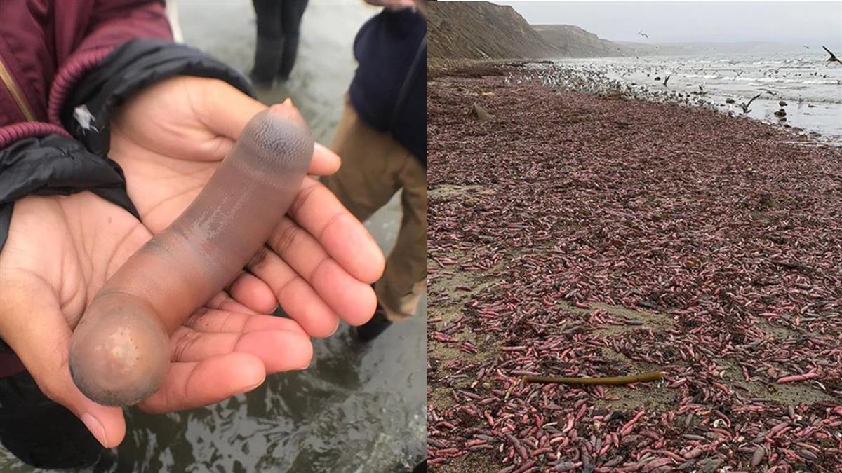 千隻25cm棒狀物暴露海灘 中醫曝驚人功效