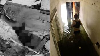 新竹廢棄工地驚見黑貓瞪眼慘死 志工心碎收屍
