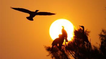 國旅補助延長 來金門賞鳥正是時候