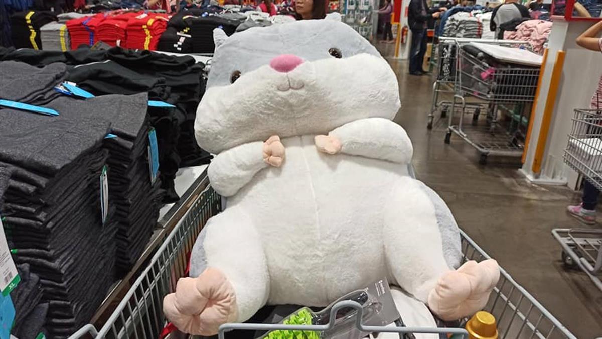 好市多巨大倉鼠!網曬購買過程 揭超佛價格