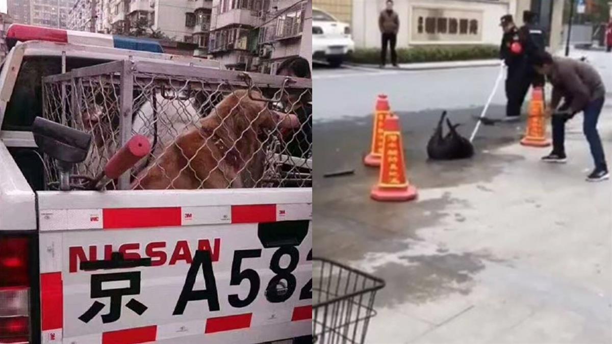 北京禁養大型犬 逼飼主自己「處置」毛小孩