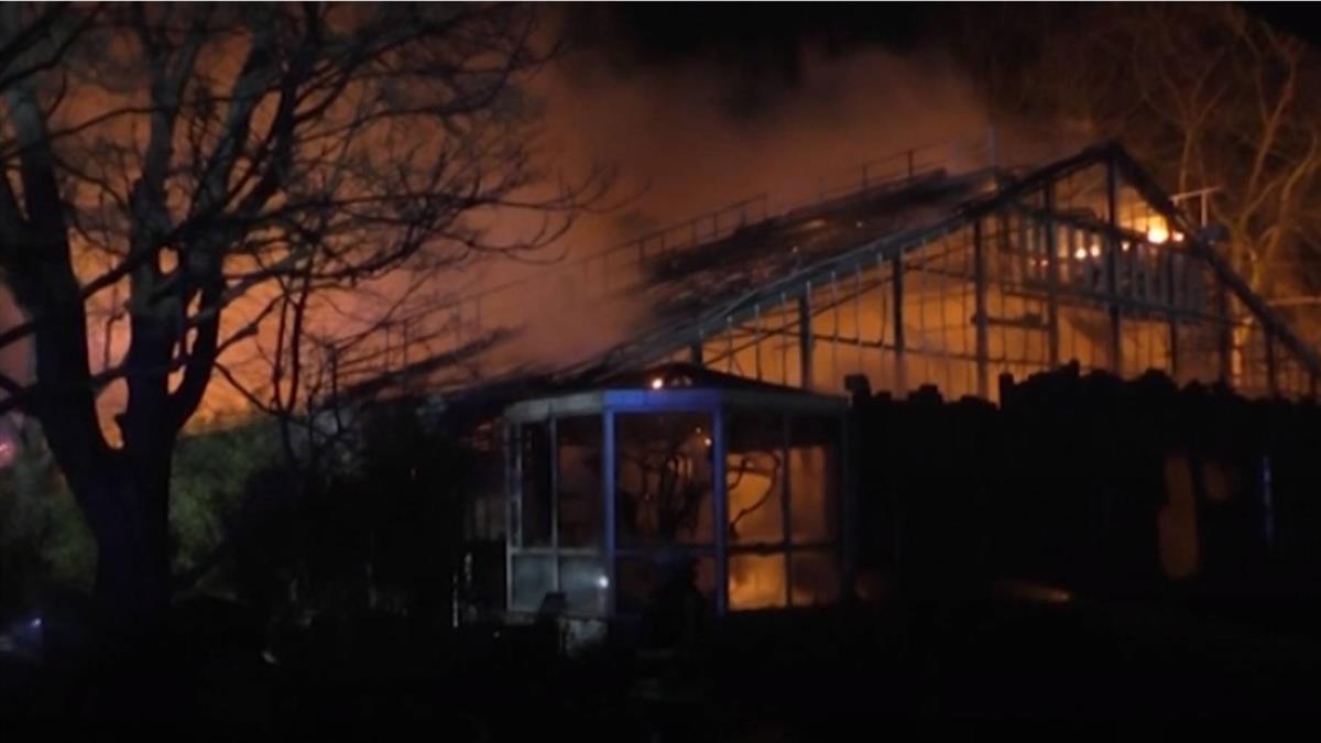 新年煙火釀火災?德國動物園30隻動物死亡
