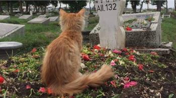 揪心!父過世不吃不喝 橘貓墓前靜坐哀悼