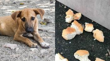 惡劣!流浪狗被餵麵包 撕開竟塞滿鐵釘