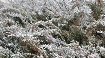 日本冷颼颼!北海道現最低溫 東京下初雪