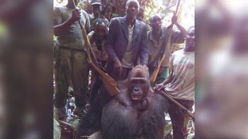 盜獵瀕危大猩猩 7男燦笑PO網炫耀