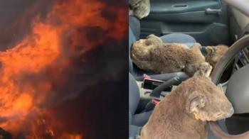 澳洲野火延燒26人亡 24嫌涉縱火10億隻動物死傷