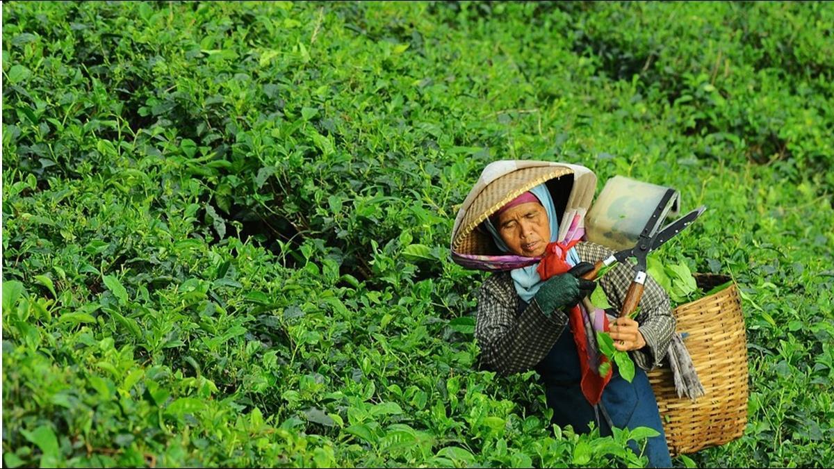 老農津貼1月起增至7550元 59萬農民受惠
