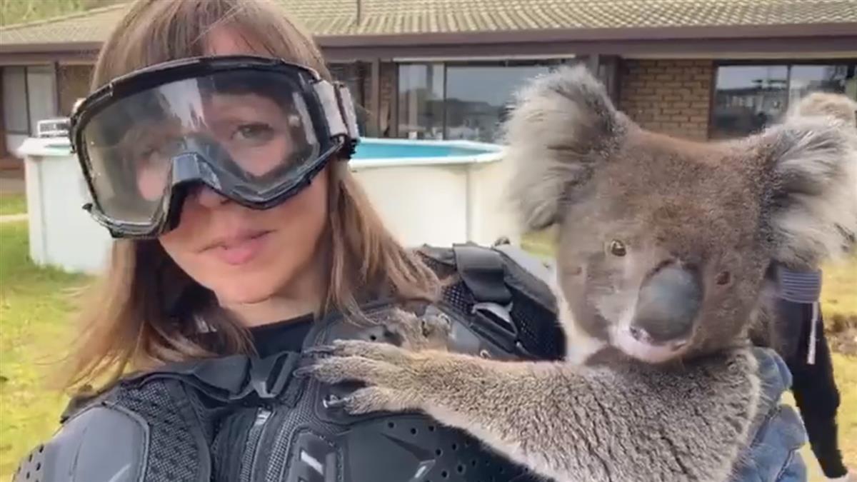 特種無尾熊有毒牙?女記者身穿盔甲 結局笑爛