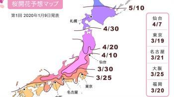 2020日本櫻花最前線 人氣景點推薦曝光