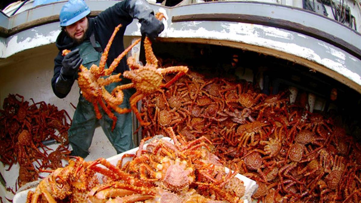工作5天賺300萬! 阿拉斯加捕蟹船缺人原因曝