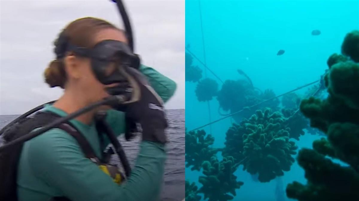 珊瑚再30年滅亡?專家推這技術搶救海洋生態