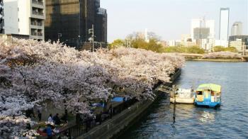 日本大阪櫻花!大阪必去3大賞櫻景點