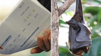 武漢肺炎起因找到了?研究推測:蝙蝠傳牠再傳人
