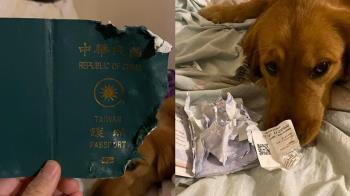 愛犬咬爛護照 她躲過武漢肺炎疫區:是保護我
