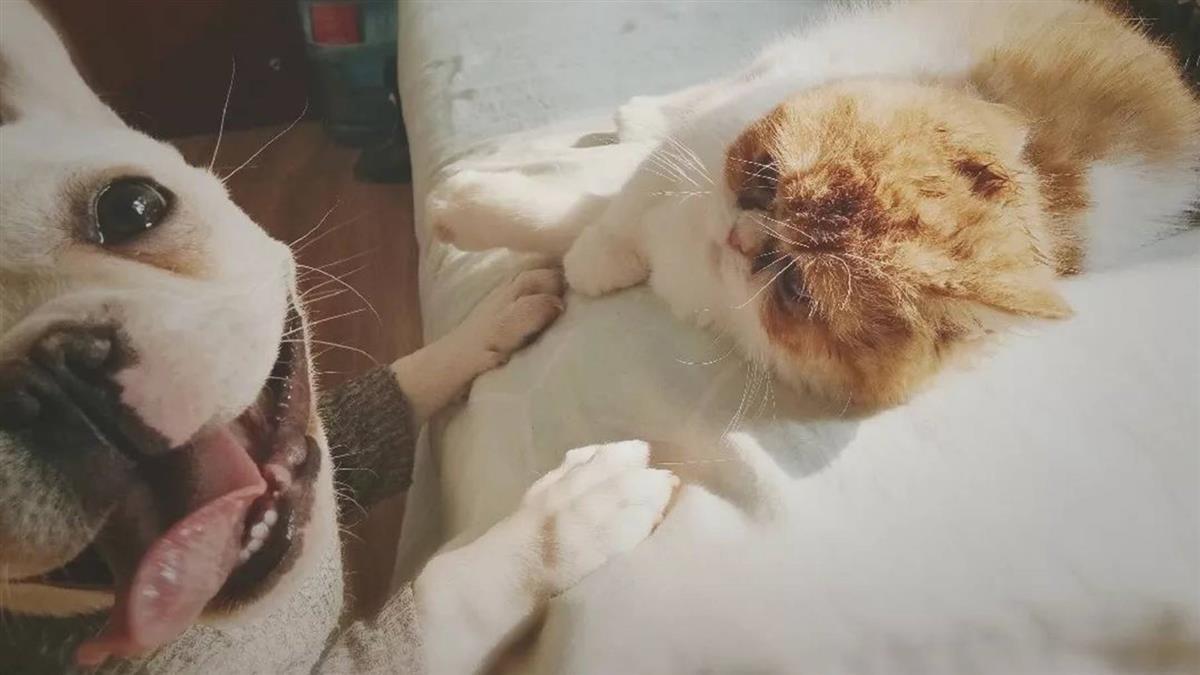 飼主疑染武漢肺炎遭隔離 貓狗慘被焚燒活埋