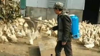 湖北武漢肺炎 湖南爆H5N1禽流感急撲殺家禽