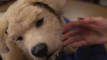 老人伙伴:智能機器狗加入養老院療癒團隊