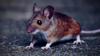 武肺宿主是老鼠?港專家推測鼠染病毒傳人